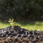 A mulher que está a transformar a agricultura no continente africano