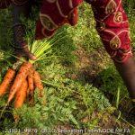 Agroecologia para sistemas alimentares sustentáveis