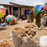 FAO: Agenda Urbana Alimentar para os governos locais