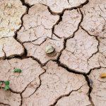 """Máximo Torero (FAO): """"Perdemos uma década na luta contra a extrema pobreza"""""""