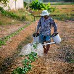São Tomé: Covid não pode ser motivo para falta de alimento aos cidadãos
