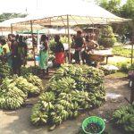 São Tomé e Príncipe cria centro de competências da agricultura a nível da CPLP